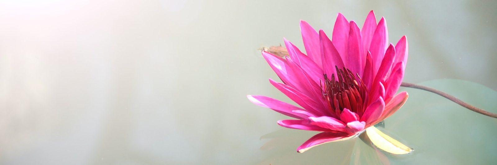 Water Flower Header