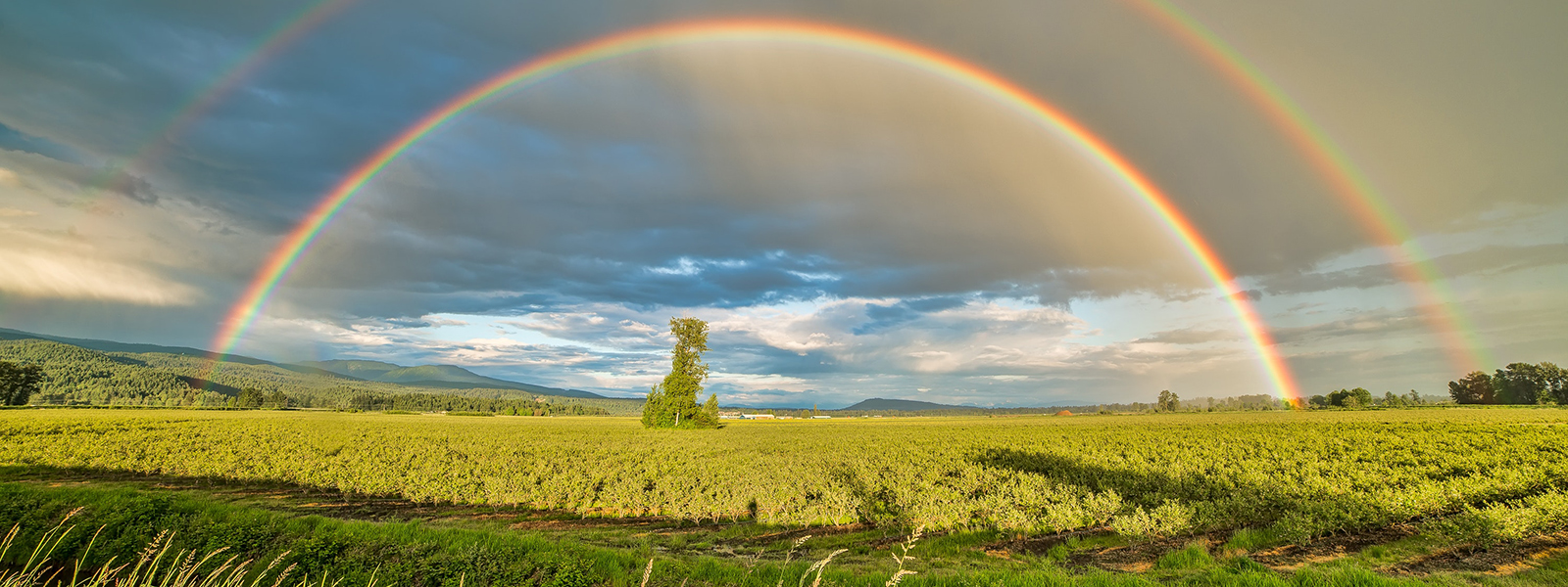 Crop field with rainbow