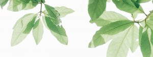 Green Leaf header